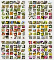 Mosaico di foto con fiori e insetti