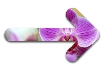 flèche orchidée