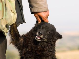 old shepherd dog is my best friend