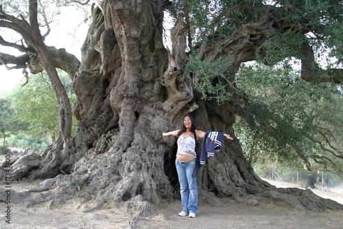 Olivo millenario immagini e fotografie royalty free su for Acquisto piante ulivo