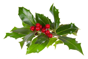 christmas decoration with holly leaves and berries,isolated on