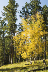 Fall Colors in the Black Hills 12