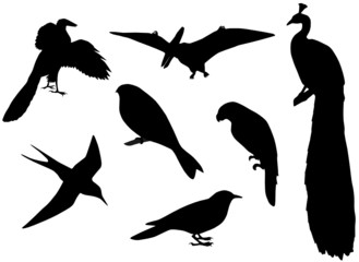 Illustration of birds