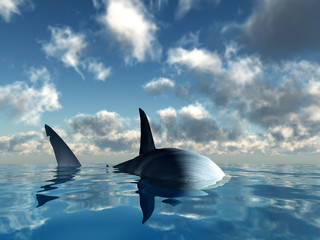 Hai auf Tuchfühlung
