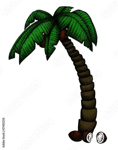 Palme, Kokosnuss, Palmenblatt, Strand, Urlaub\