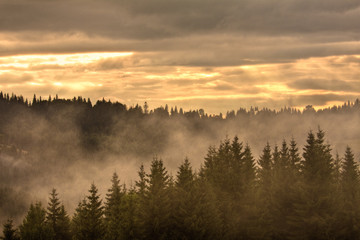 Trees at a foggy scenery morning