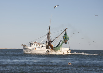 Shrimp Boat with Flock of Sea Gulls