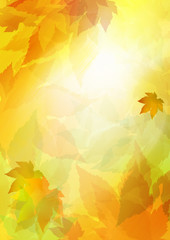 autumn leaf fall, sunlight