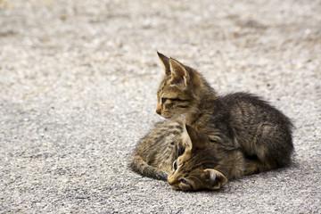 frei lebende katzenbabys  auf der Strasse, griechenland
