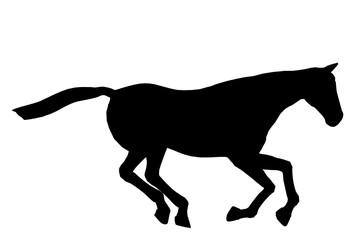 Horse Illustration Silhouette