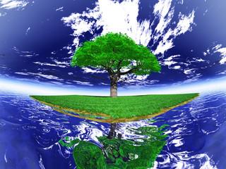 l'arbre sur l'ile