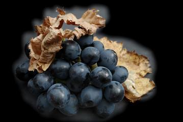 grapes;