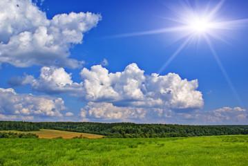 Sunny summer landscape