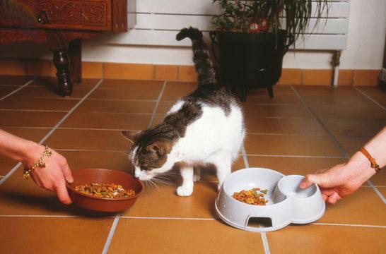chat hésitant entre deux sortes d'aliments pour animaux