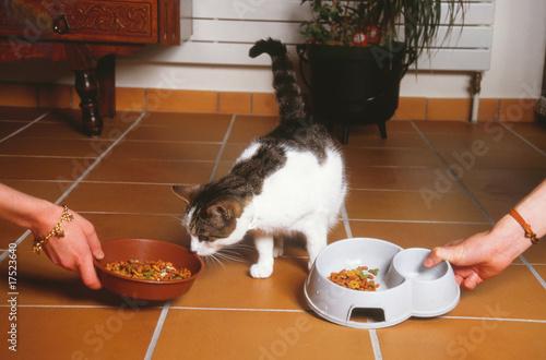 Правильно кормить кошку в домашних условиях