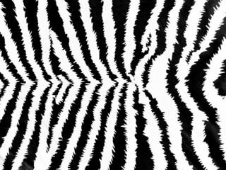 Zebra skin pattern on leather background
