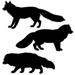 . silhouette polar fox, badger, vixens