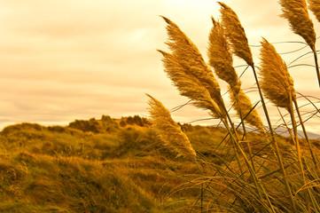 grass - sunset