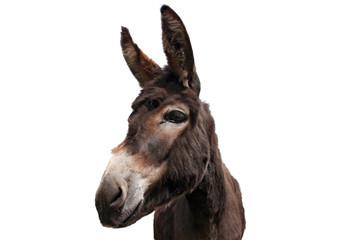Foto auf Gartenposter Esel Esel Freisteller