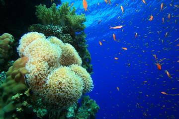 Beautiful Corals