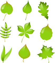 Set of isolated vector leaves.