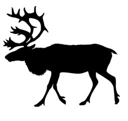 silhouette of the reindeer
