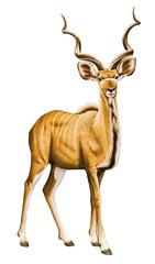 Printed kitchen splashbacks Antelope Antilope