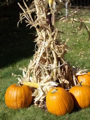 The Halloween Spirit