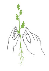 illustration of the plants in hand