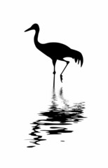 silhouette of the crane amongst water
