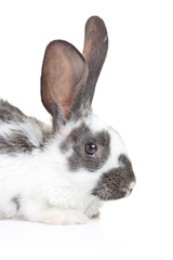 A rabbit isolated on white background