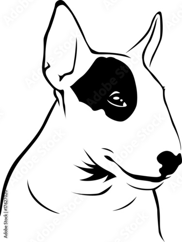 Quot Bull Terrier Quot Stock Image And Royalty Free Vector Files