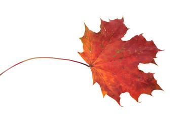 beautiful autumn colour leaf