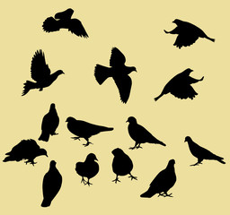 vector illustration of a pigeons collection