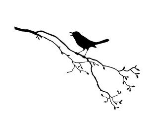 silhouette of the bird on branch tree