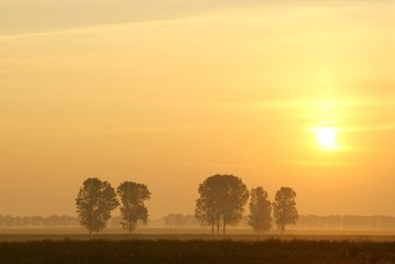 Misty summer sunrise with trees in the field of rape