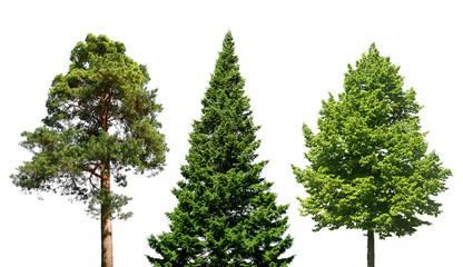 Three trees on white