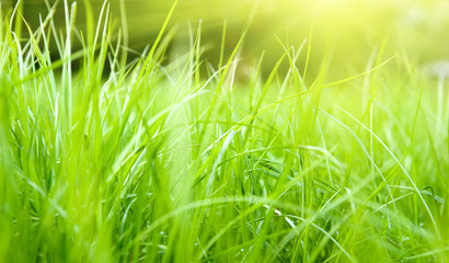 spring grass and sunlight