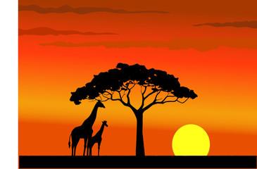 Sunset of wildlife Africa