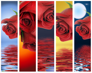 Vertical banners with red roses