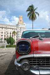 Garden Poster Cars from Cuba Oldie