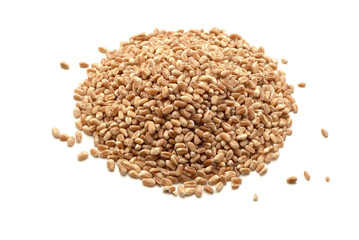 wheat grains isolated