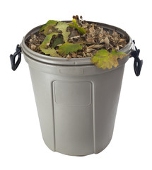dry leaves in a plastic garbage bin