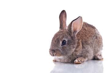 Cute bunny isolated on white with reflection.