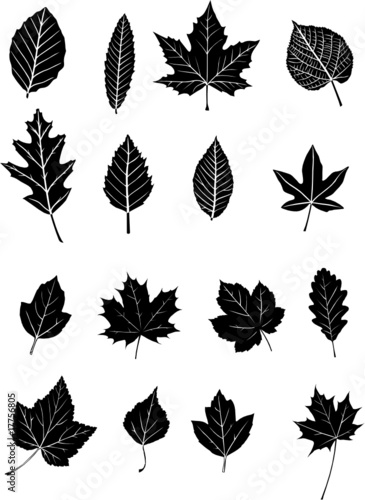 feuilles d 39 arbres b fichier vectoriel libre de droits. Black Bedroom Furniture Sets. Home Design Ideas