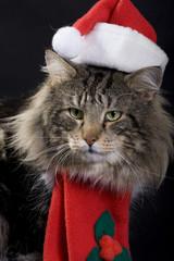 świąteczny kot3
