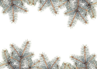 Silver Pine branches