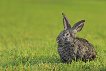 A rabbit lying in  the a green grass