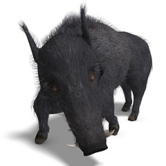 dangerous black boar is stiff-bristled