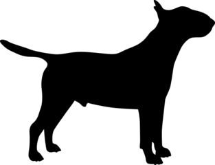 Bull Terrier - Silhouette